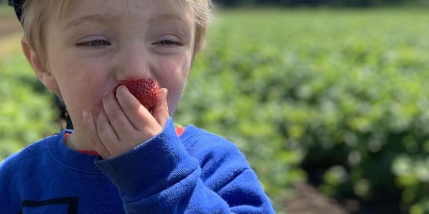 Strawberry Upick Open