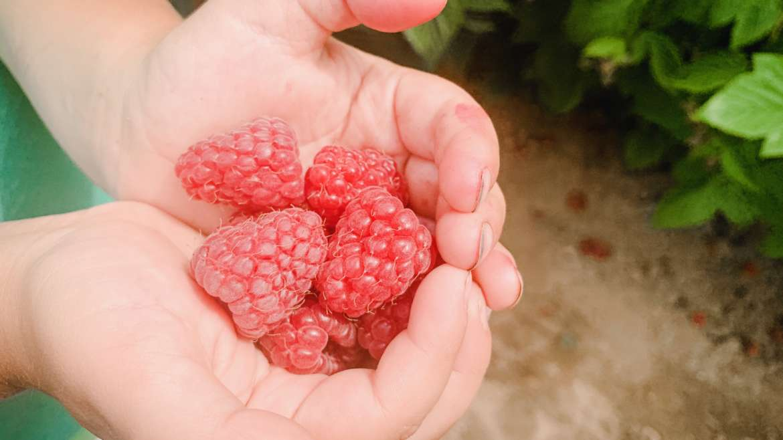 Raspberry Upick Open