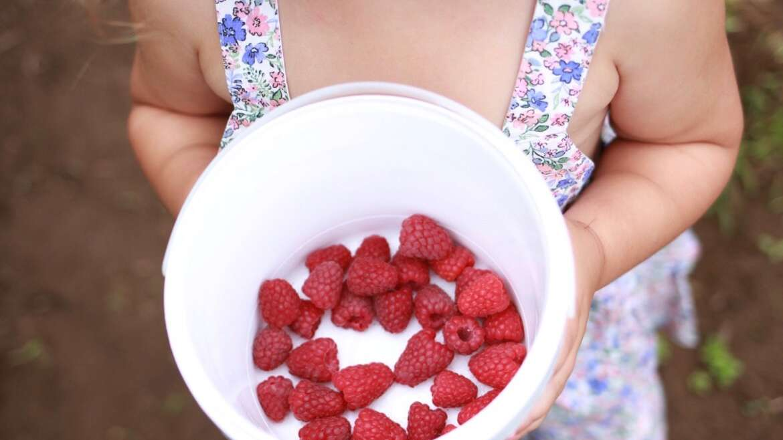 Upick Open – Strawberry and Raspberry