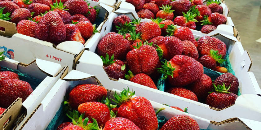 Fresh We-Pick Strawberries