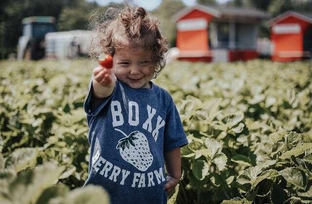 Strawberry Upick -Don't Delay