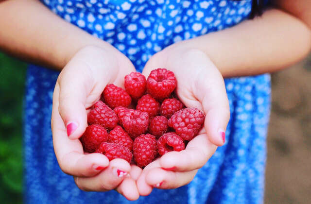 Raspberry Upick Opens Saturday June 27th