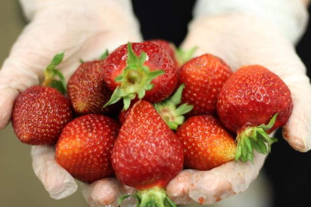 Puget Crimson Strawberries