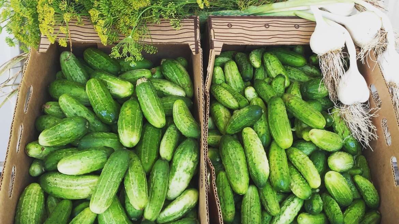 Cucumber List