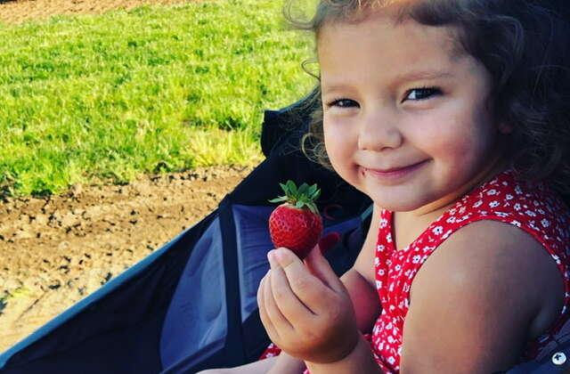 Upick Strawberries