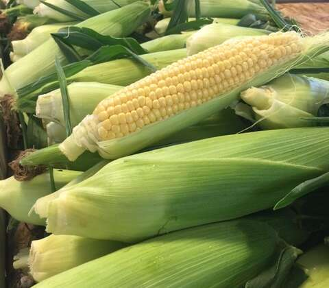 Fresh Boxx-Grown Non-GMO Corn