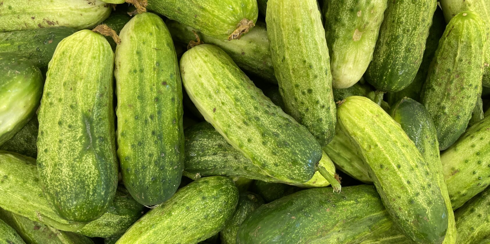 Cucumbers 🥒