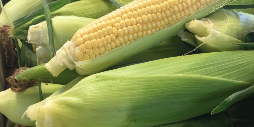 Corn is Here!
