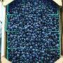 Blueberries are AMAZING